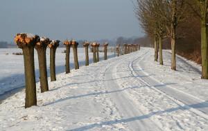 winterswit